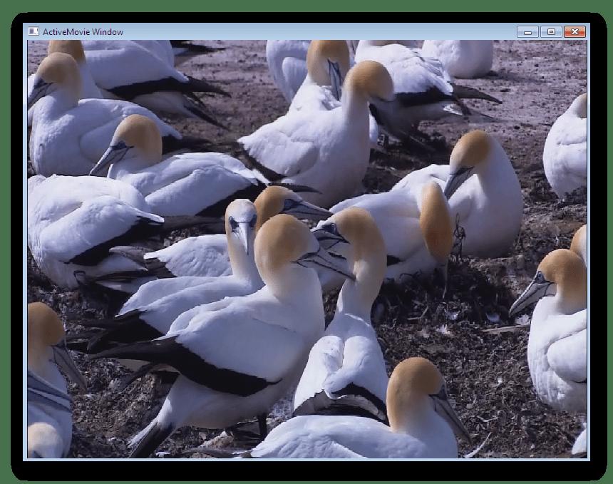 Просмотр видео после загрузки в программу Video Wallpaper