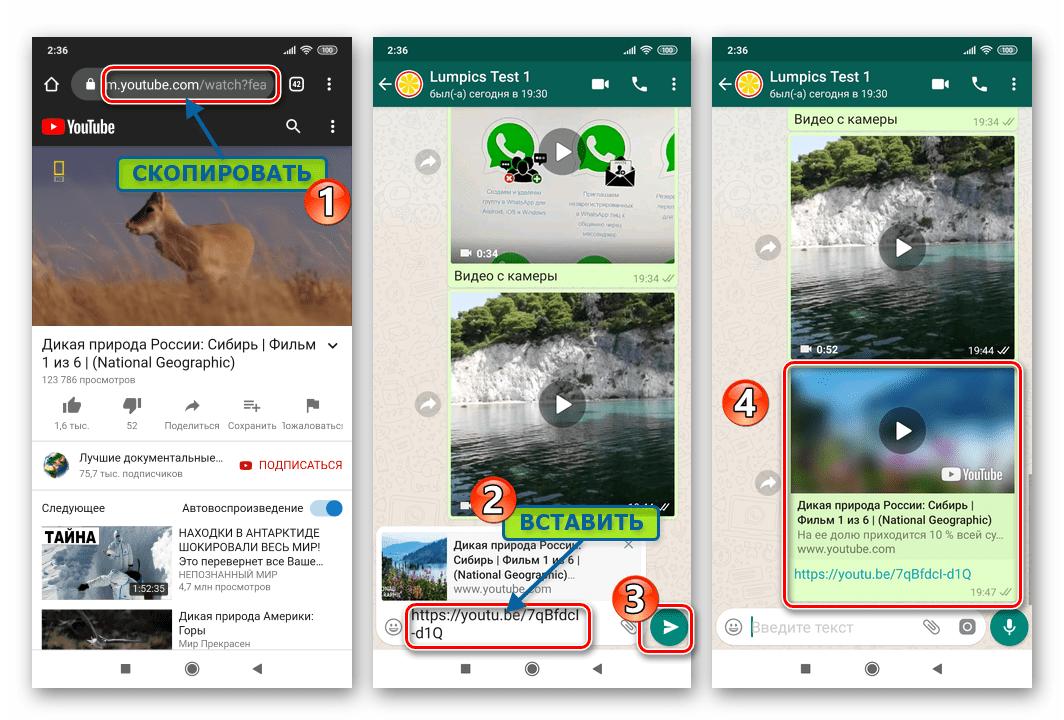 WhatsApp для Android копирование ссылки на видео с интернет-ресурса и ее вставка в сообщение
