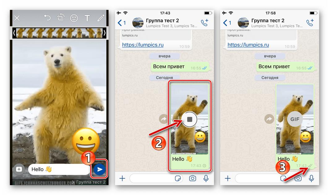 WhatsApp для iOS процесс отправки гифки из хранилища iPhone в чат или группу