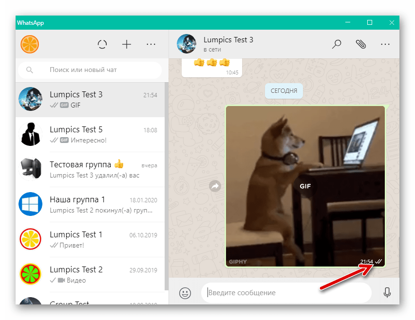 WhatsApp для Windows гифка из библиотеки в программе отправлена через мессенджер