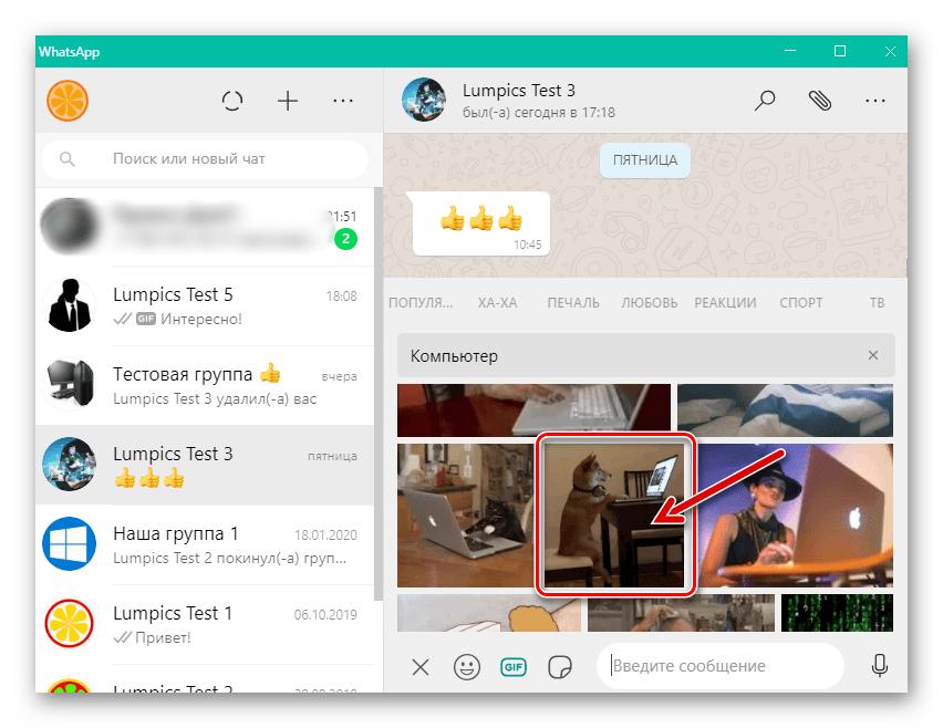 WhatsApp для Windows выбор гифки для отправки через мессенджер в каталоге GIPHY