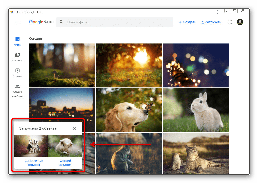 Успешная загрузка изображений с компьютера на веб-сайте Google Фото