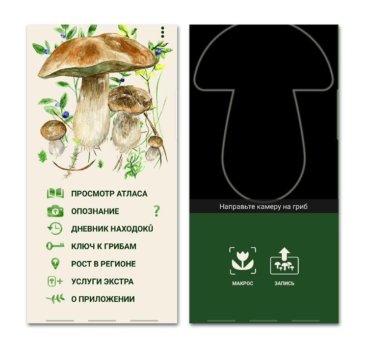 Приложение по грибы на Android