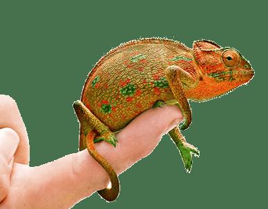 Chameleon - скачать бесплатно Хамелеон