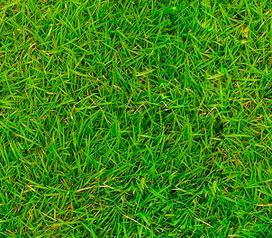 Готовая текстура травы