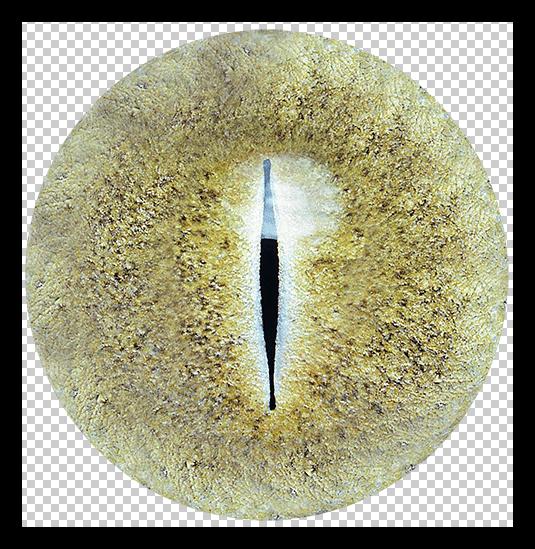 Текстура для глаза в Фотошопе
