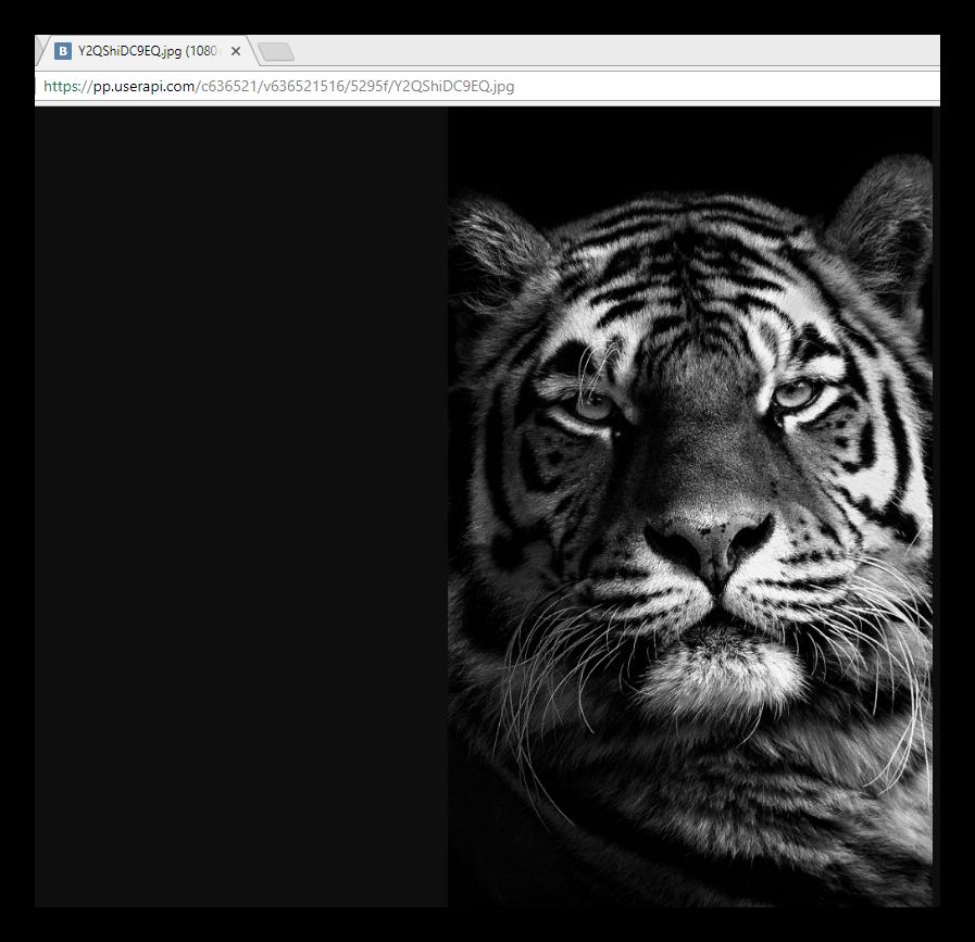 Отрытый оригинал изображения на новой вкладке через режим полноэкранного просмотра ВКонтакте