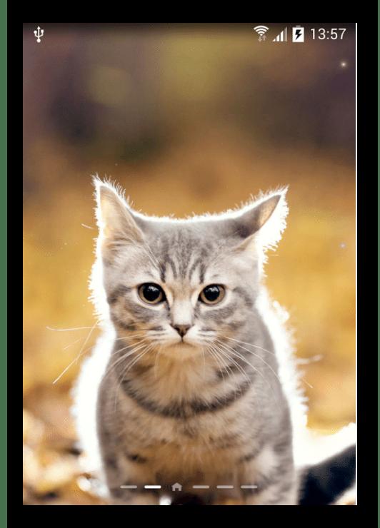 Кот Живые Обои