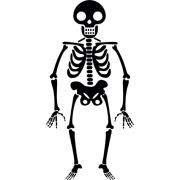 Как создать 3D модель скелета человека онлайн
