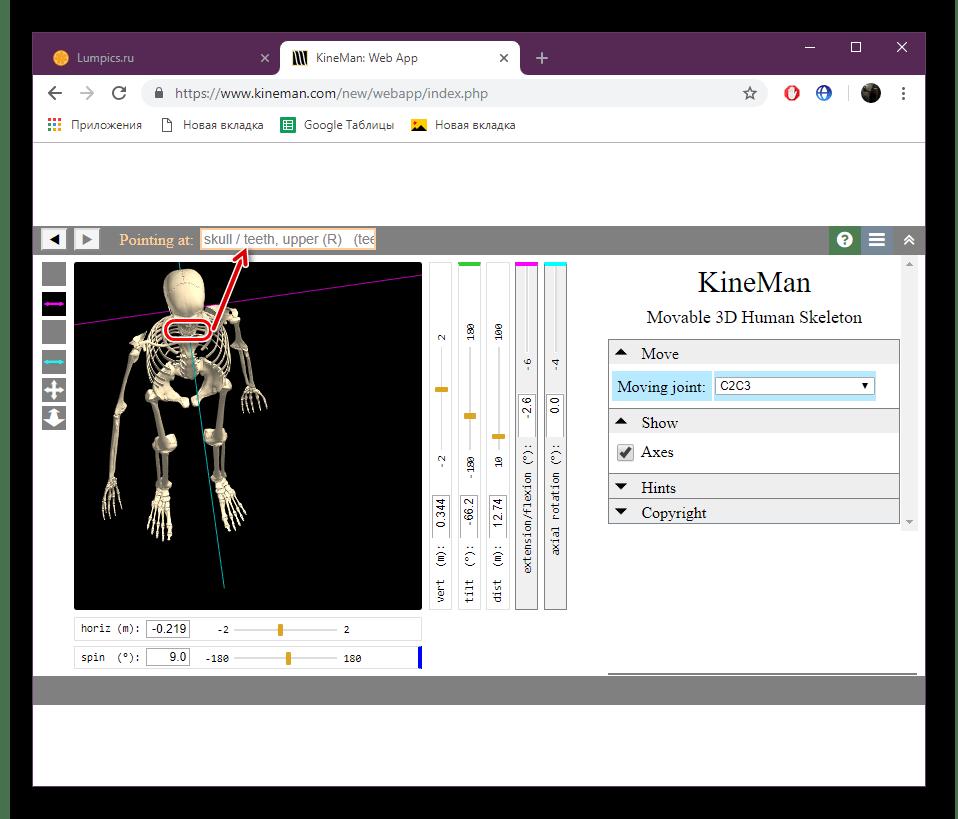 Надписи костей на сайте KineMan
