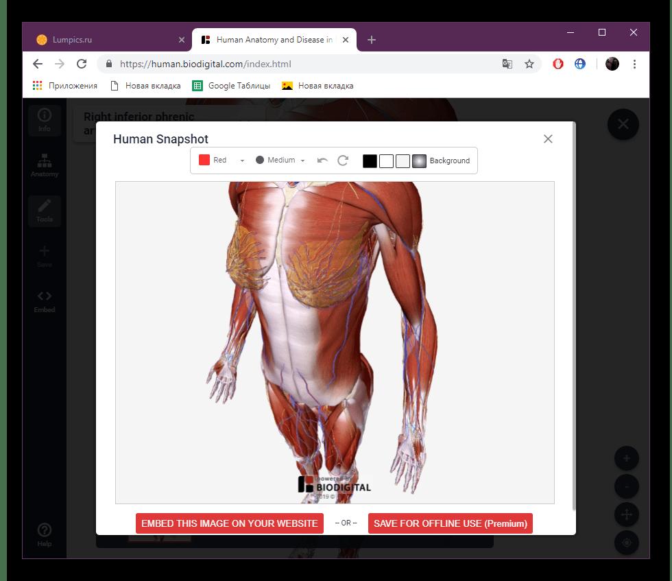 Сохранить скриншот на сайте BioDigital