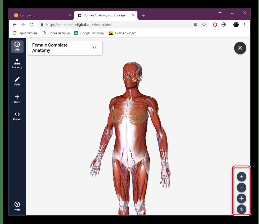Управление скелетом на сайте BioDigital