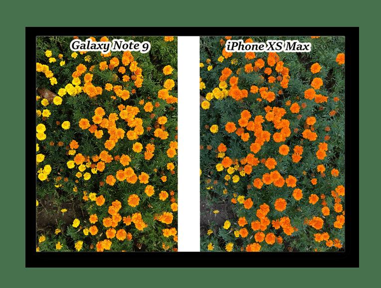 Сравнение передачи цветов на фотографиях на iPhone XS Max и Galaxy Note 9